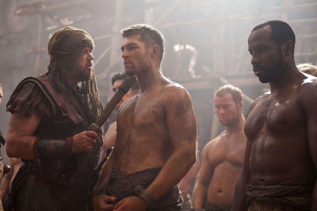 Lässt sich auf ein Todeskommando ein, um Crixus' große Liebe Naevia zu retten: Spartacus (Liam McIntyre, M.) ... - Bildquelle: 2011 Starz Entertainment, LLC. All rights reserved.