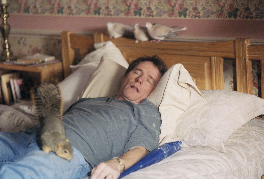 Vater Hal (Bryan Cranston) gönnt sich ein Nickerchen ... - Bildquelle: TM +   2000 Twentieth Century Fox Film Corporation. All Rights Reserved.