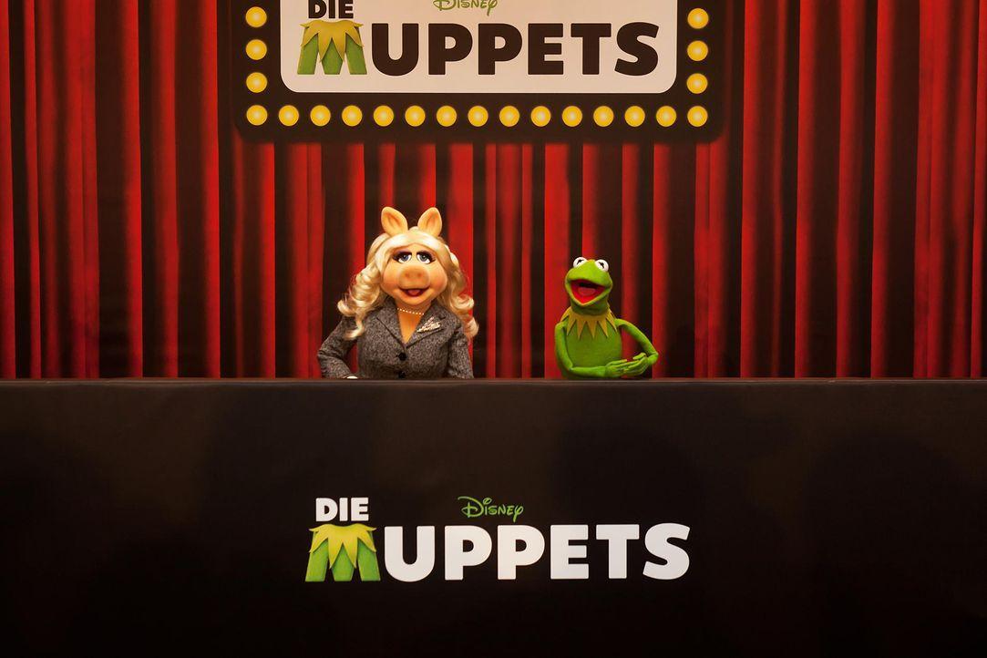 muppets-fotocall-berlin-01-hanna-boussouar-walt-disney-companyjpg 1900 x 1267 - Bildquelle: Hanna Boussouar/Walt Disney Company