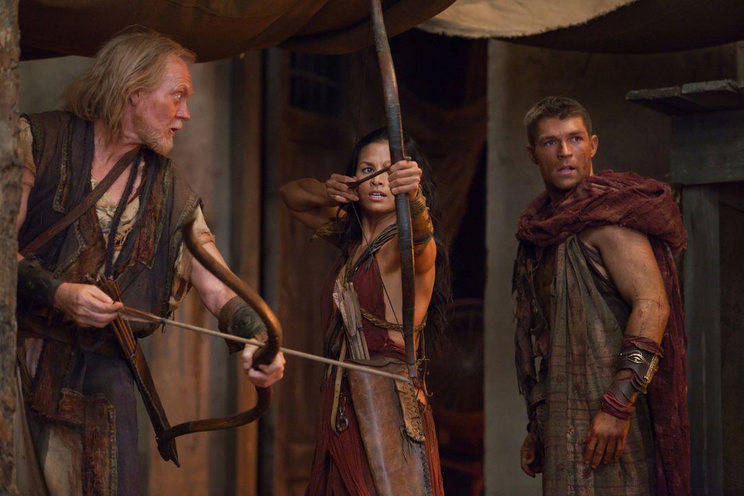 Als Glaber die Falle zuschnappen lassen möchte, holt Spartacus (Liam McIntyre) seine Bogenschützen hervor: Mira (Katrina Law) und Lucius (Peter McCa... - Bildquelle: 2011 Starz Entertainment, LLC. All rights reserved.