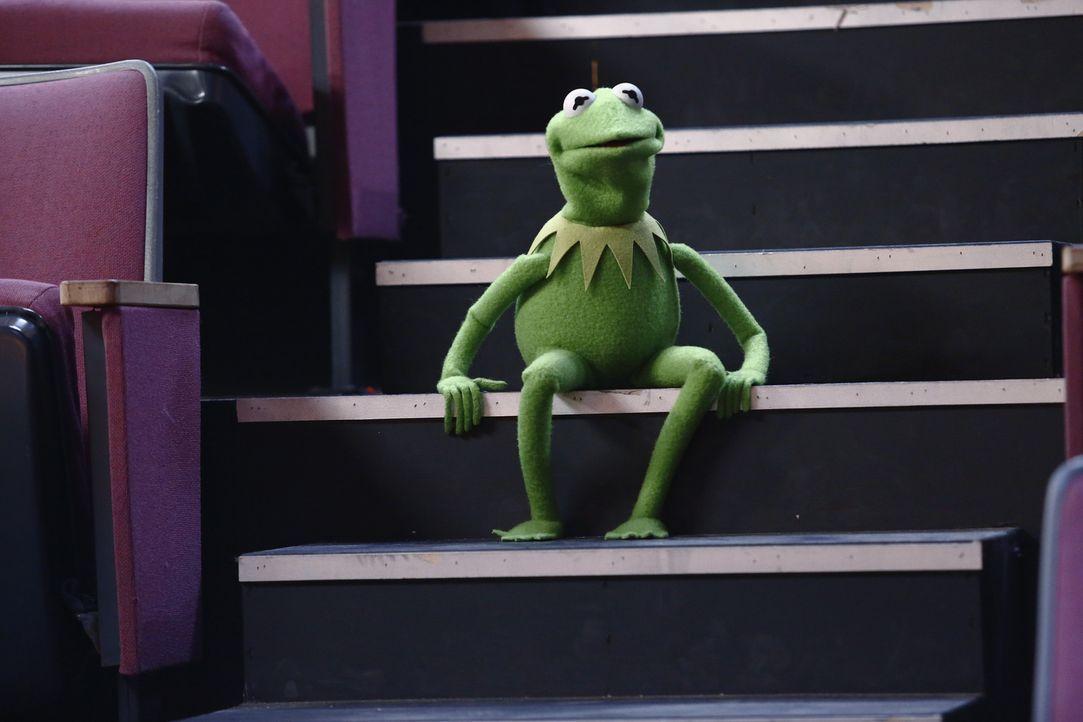 Macht sich Sorgen um Miss Piggy, die sich bei Proben für eine Tanzeinlage das Bein gebrochen hat: Kermit ... - Bildquelle: ABC Studios