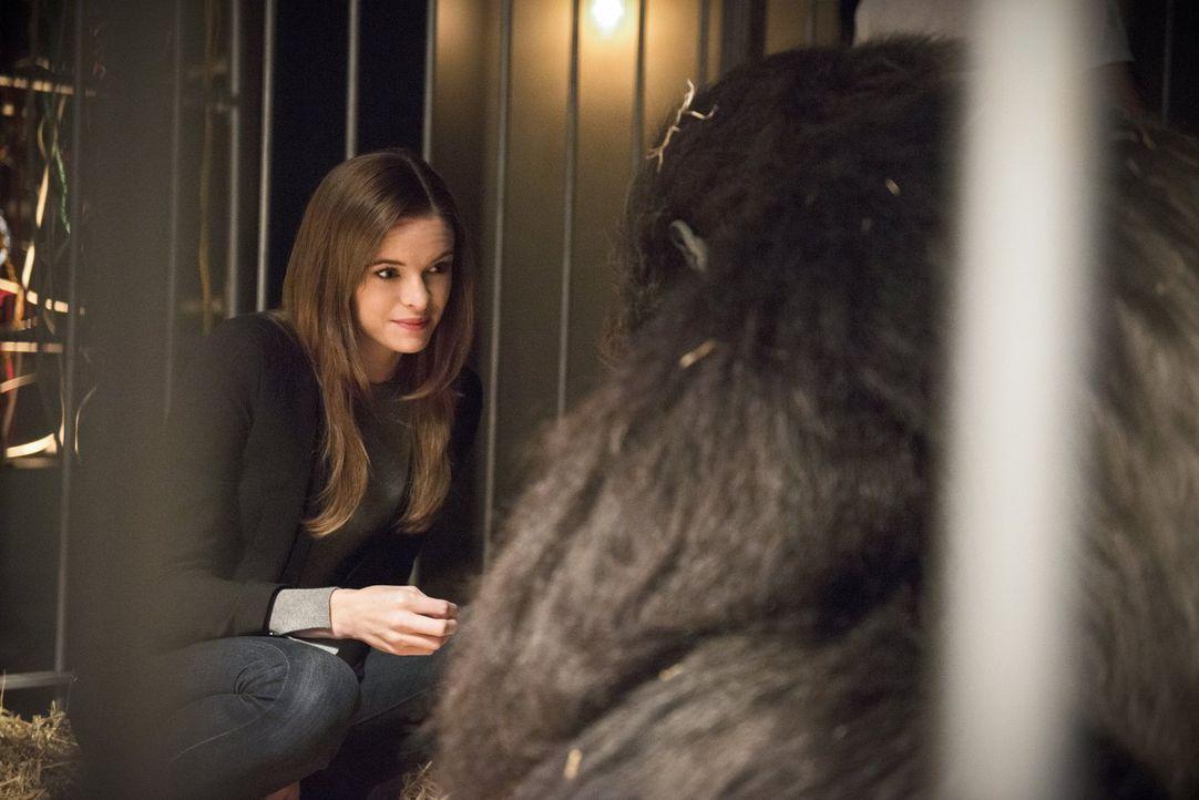 Caitlin (Danielle Panabaker, l.) wird von Grodd entführt und das ausgerechnet zu dem Zeitpunkt, als Barry nicht einsatzfähig ist ... - Bildquelle: 2015 Warner Brothers.