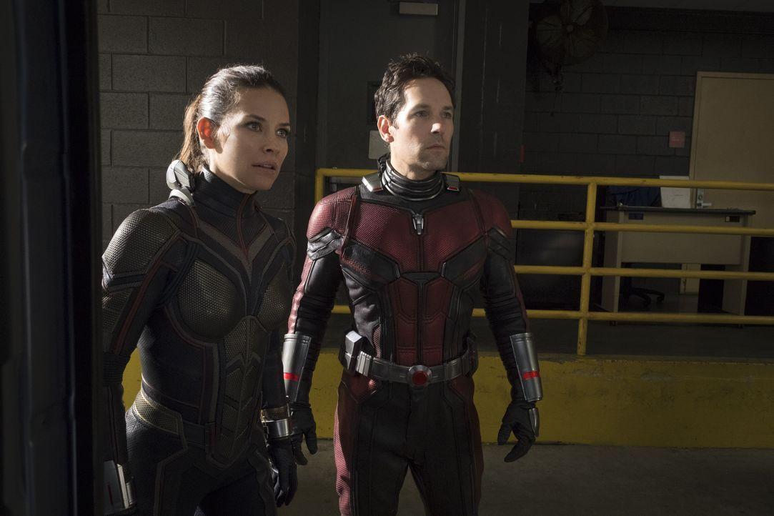 Hope Van Dyne / Wasp (Evangeline Lilly, l.); Scott Lang / Ant-Man (Paul Rudd, r.) - Bildquelle: Ben Rothstein 2018 MARVEL / Ben Rothstein