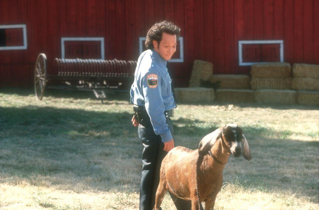 Seit einer eigenartigen Operation unter freiem Himmel fürchtet Marvin (Rob Schneider) weder Hund noch Herrchen ... - Bildquelle: 2003 Senator Film