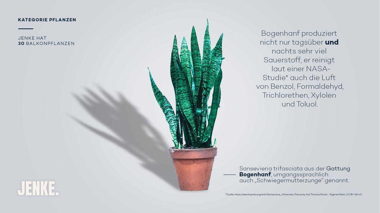 Pflanzen - Bildquelle: ProSieben
