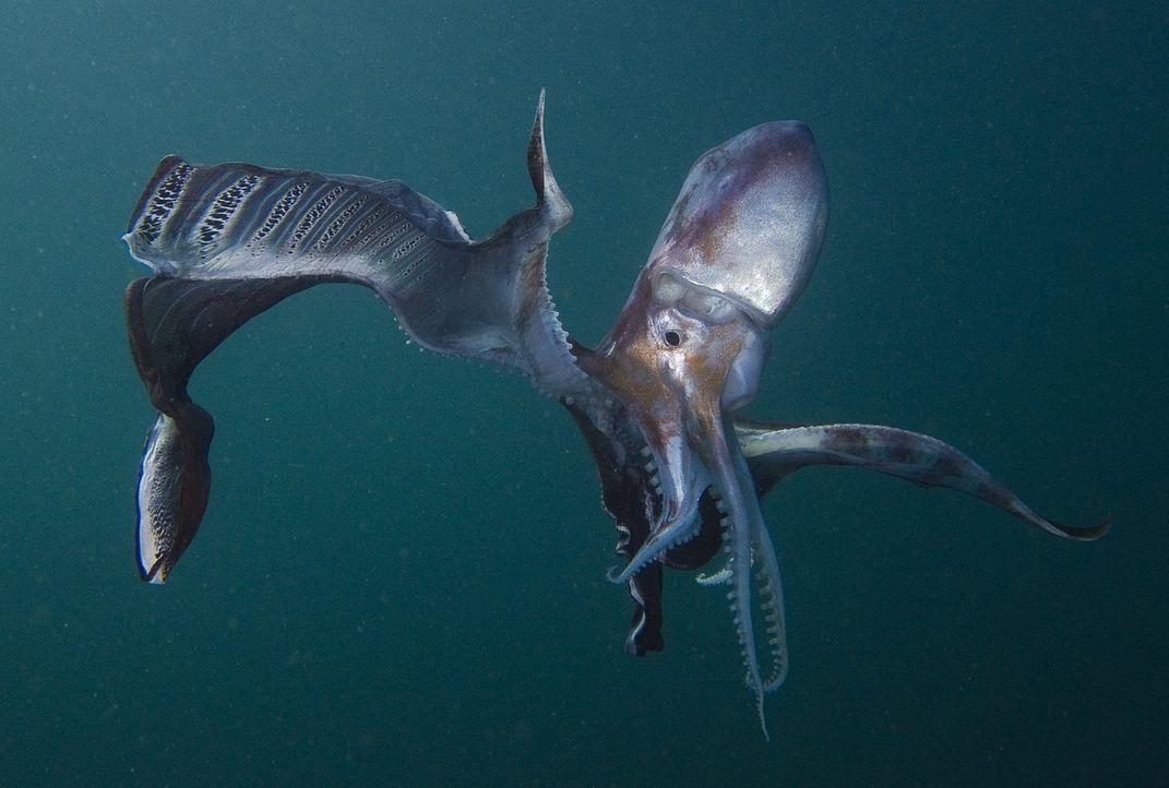 Der Mensch war auf dem Mond, die Tiefen der Meere sind jedoch noch immer unerschlossen. Beeindruckende Unterwasseraufnahmen lassen erahnen, welch wu... - Bildquelle: Hideki Abe Universum Film