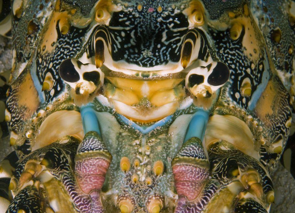 Dank modernster Ausrüstung und Kameratechnik sind dabei beeindruckende Bilder über das geheimnisvolle Innenleben der Ozeane entstanden, dem größten... - Bildquelle: Pascal Kobeh Universum Film