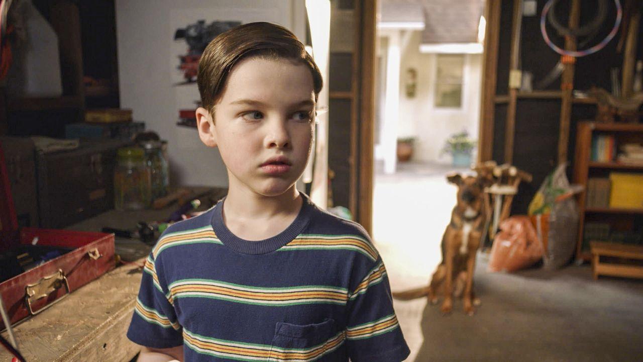 Der neue Hund der Sparks sucht sich ausgerechnet Sheldon (Iain Armitage) als neuen besten Freund aus, obwohl dieser panische Angst vor Hunden hat ... - Bildquelle: Warner Bros. Television