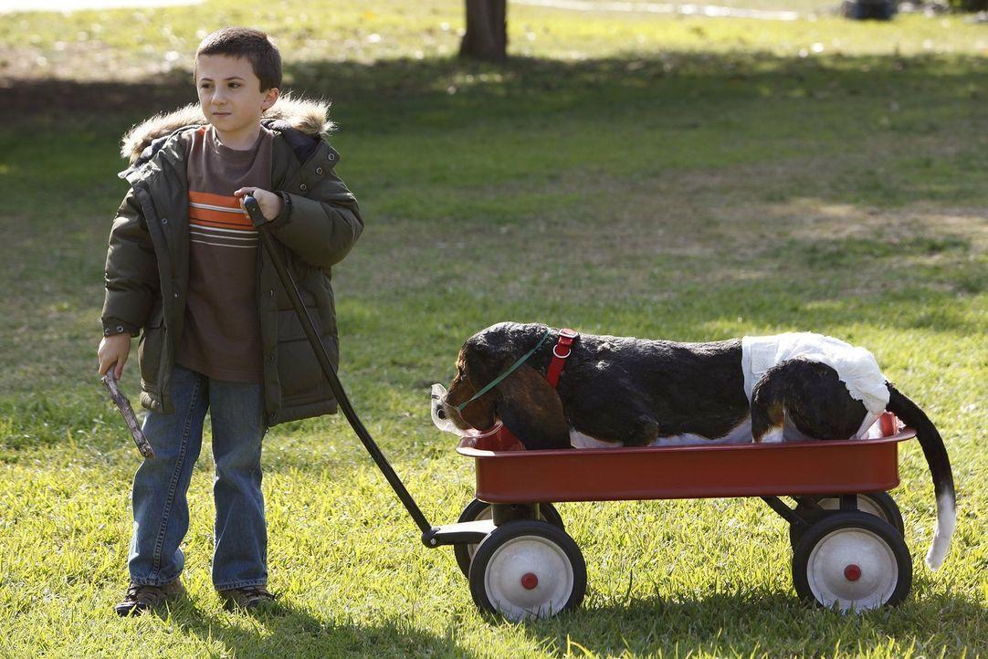 Brick (Atticus Shaffer) nimmt seine Hundesitter-Pflichten sehr ernst ... - Bildquelle: Warner Brothers