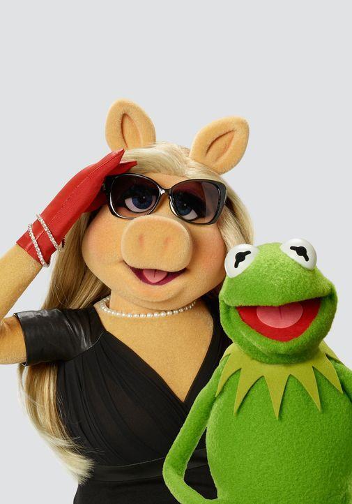 """(1. Staffel) - Nach der überraschenden Trennung von Miss Piggy (l.) und Kermit (r.) stellt die Produktion der """"Up Late with Miss Piggy"""" Sendung eine... - Bildquelle: Bob D'Amico ABC Studios"""