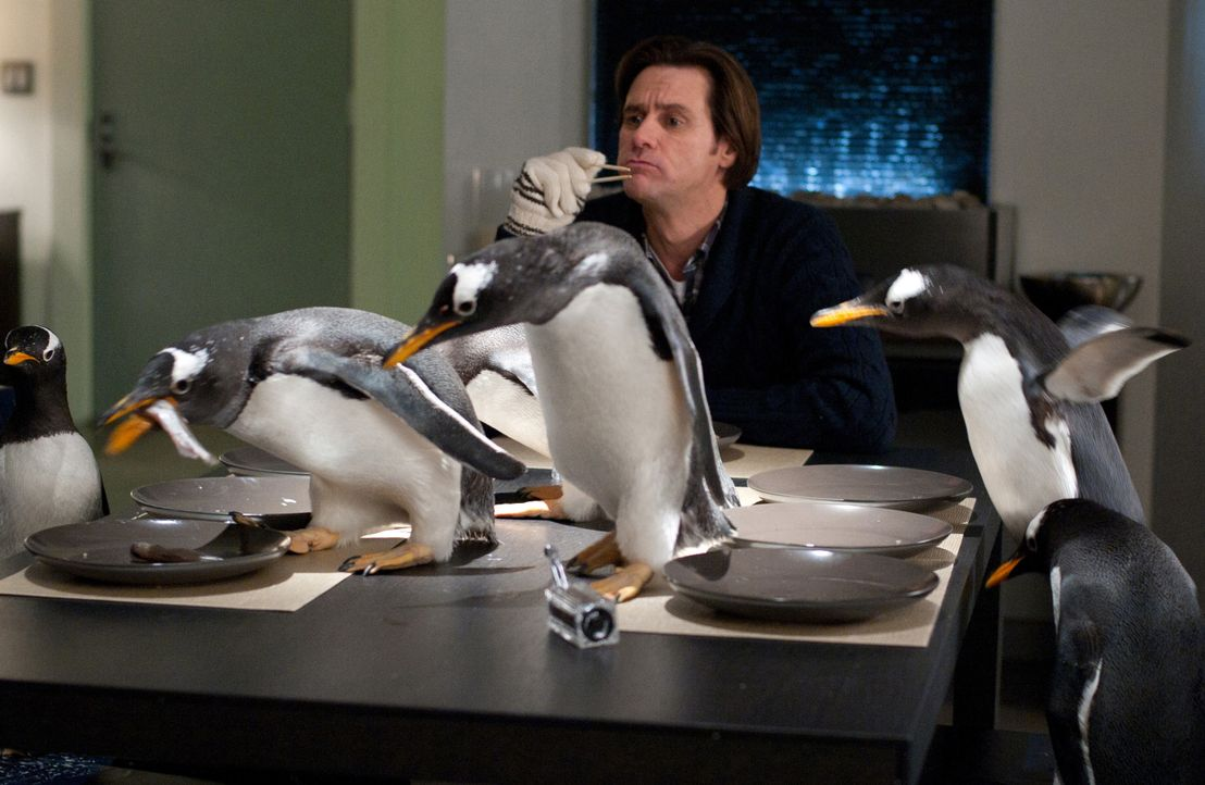 Das Leben von Immobilienmanager Tom Popper (Jim Carrey) läuft wie geölt. Bis ihm die Erbschaft seines Vaters sechs leibhaftige Pinguine ins Haus fla... - Bildquelle: 2011 Twentieth Century Fox Film Corporation. All rights reserved.
