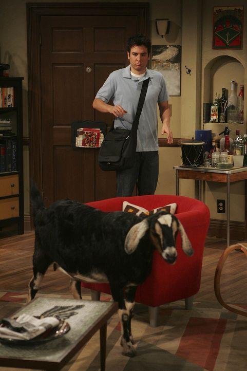 Tierischer Besuch: Ted (Josh Radnor) ... - Bildquelle: 20th Century Fox International Television