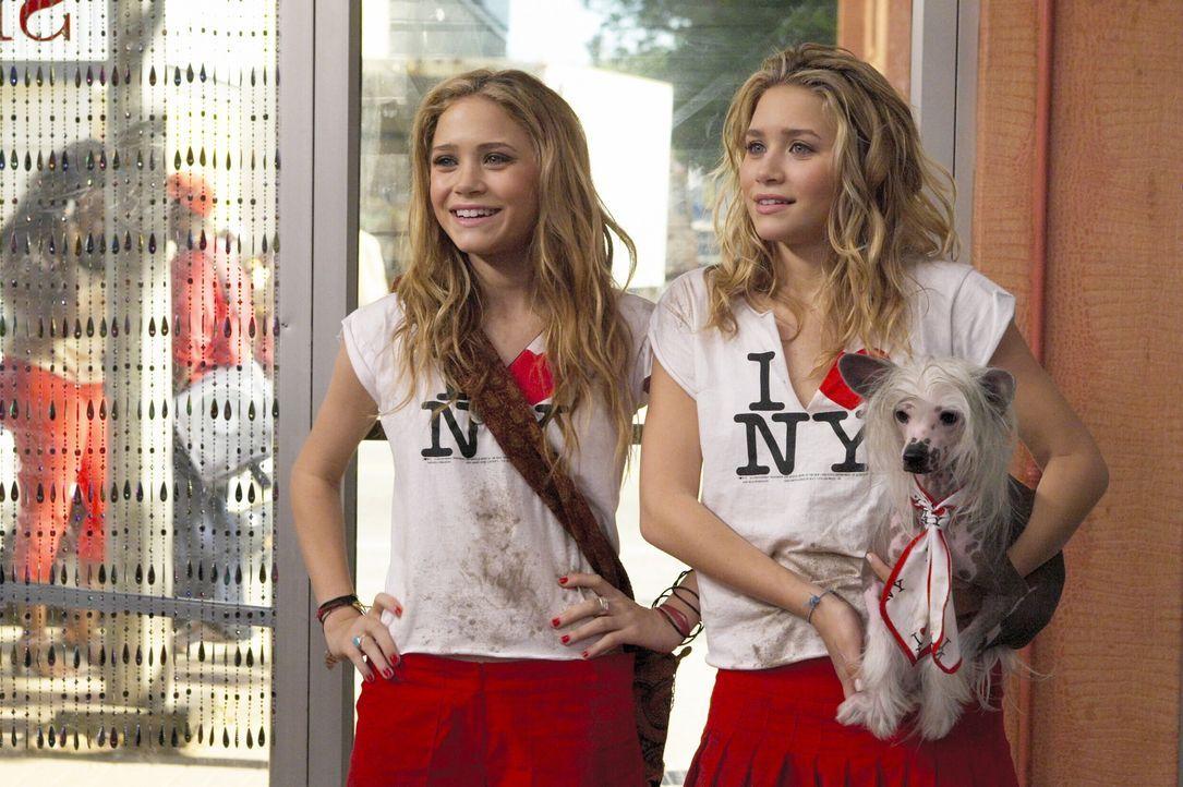 Noch sind die Zwillinge voller Hoffnung, dass all ihre Träume in Erfüllung gehen. Aber anscheinend hat sich New York gegen Roxy (Mary-Kate Olsen,... - Bildquelle: Warner Brothers International Television