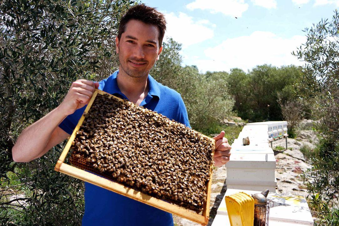Stefan Gödde reist um die Welt, um mehr über die bedrohte Insektenart Biene zu erfahren ... - Bildquelle: ProSieben
