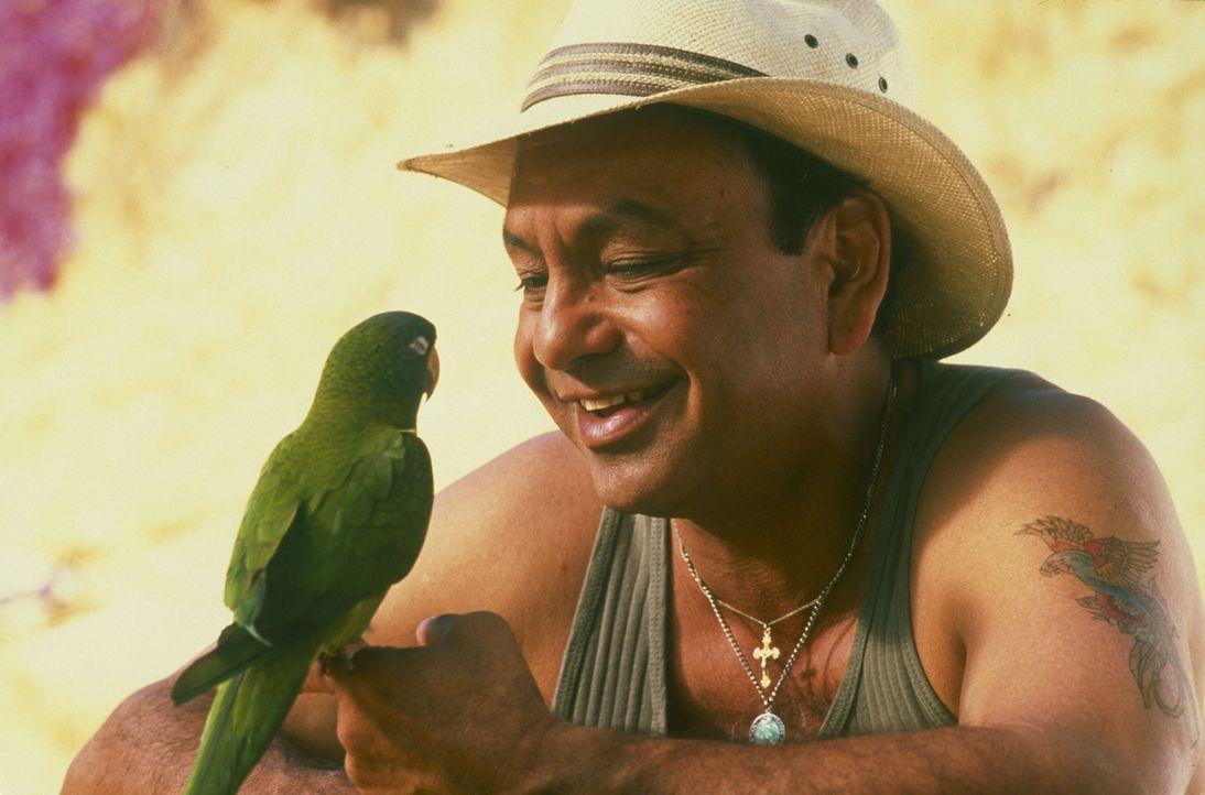 Auf der hoffnungslosen Suche nach seiner besten Freundin stößt der kluge Papagei Paulie (l.) auf den Straßenverkäufer Ignacio (Cheech Marin, r.)... - Bildquelle: TM &   (1998) DREAMWORKS LLC. ALL RIGHTS RESERVED.