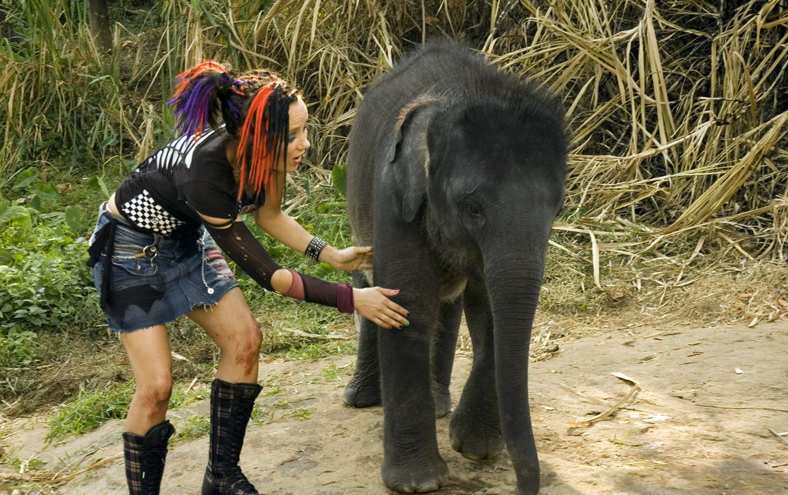 In einer alten Palastanlage entdecken Taffie (Monique van der Werff) und die anderen Zooranger die angeketteten Elefanten. Als sie die Elefanten bef... - Bildquelle: Jan van den Nievwenhuijzen