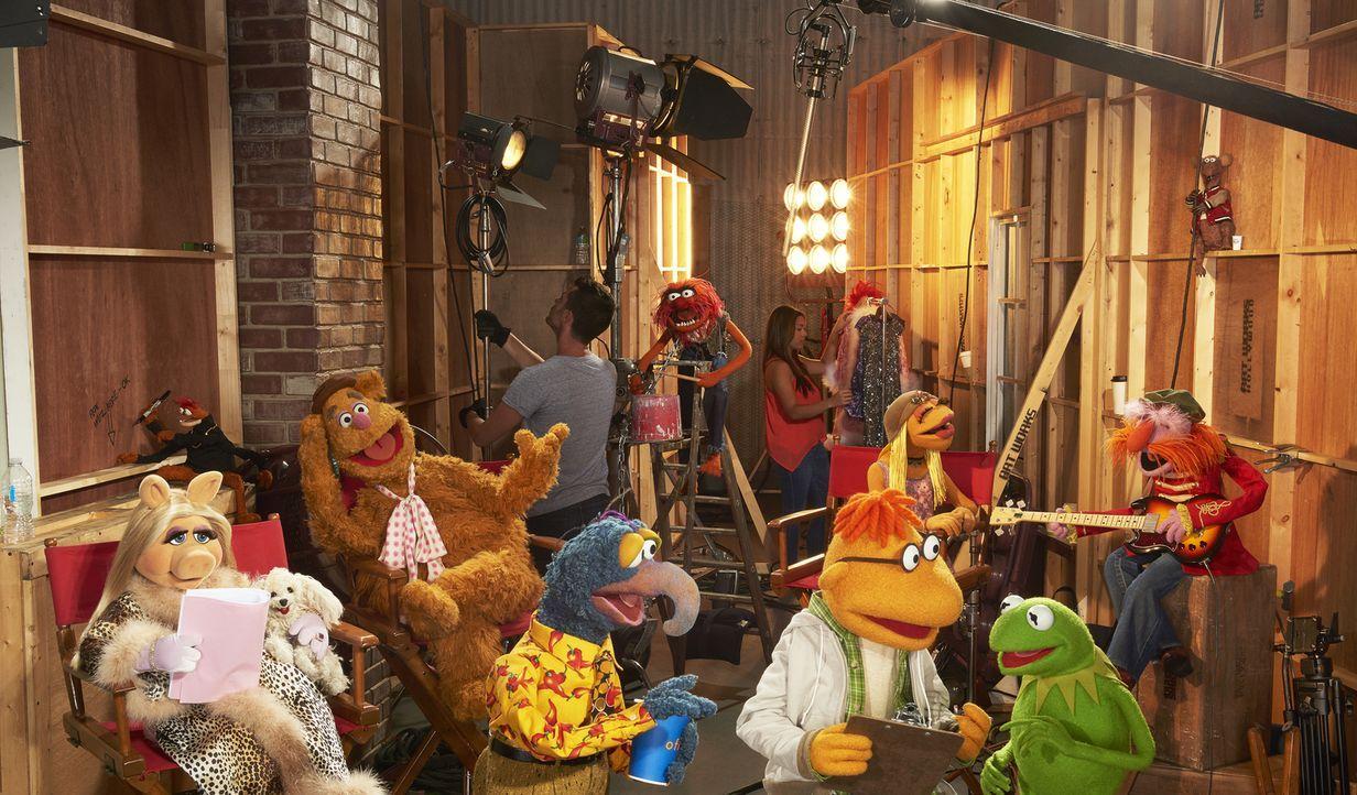 (1. Staffel) - Gewähren uns Einblicke hinter die Kulissen ihrer Late-Night-Talkshow: Kermit (2.v.r.), Miss Piggy (l.), Gonzo (4.v.l.), Fozzie Bär (3... - Bildquelle: Bob D'Amico ABC Studios