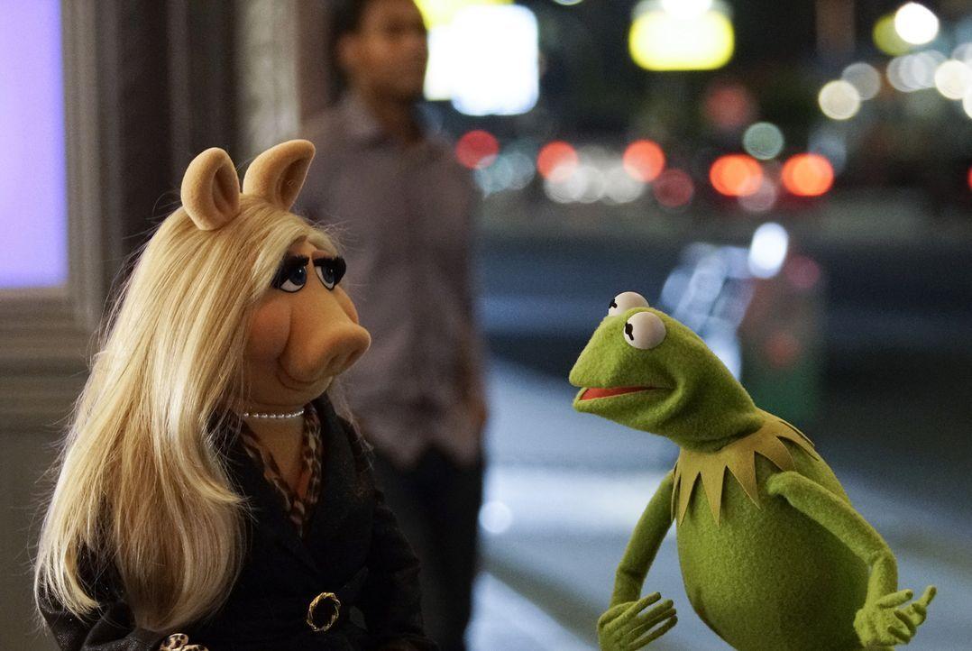 """Nach der überraschenden Trennung von Miss Piggy (l.) und Kermit (r.) stellt die Produktion der Sendung """"Up Late with Miss Piggy"""" eine große Herausfo... - Bildquelle: Michael Desmond ABC Studios"""