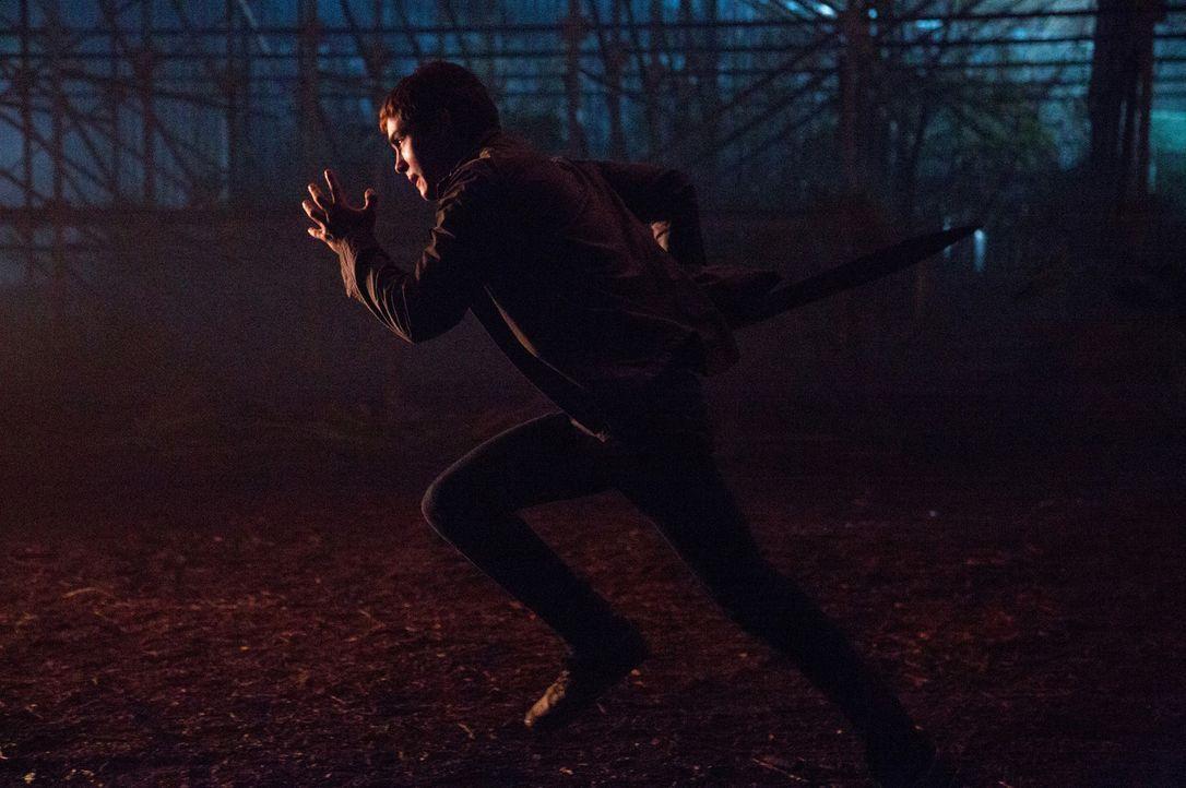 Auch Percys (Logan Lerman) siebtes Schuljahr verläuft nicht wirklich ruhig: Erst vergiftet jemand den Baum der Thalia im Camp der Halbgötter und heb... - Bildquelle: 2013 Twentieth Century Fox Film Corporation.  All rights reserved.