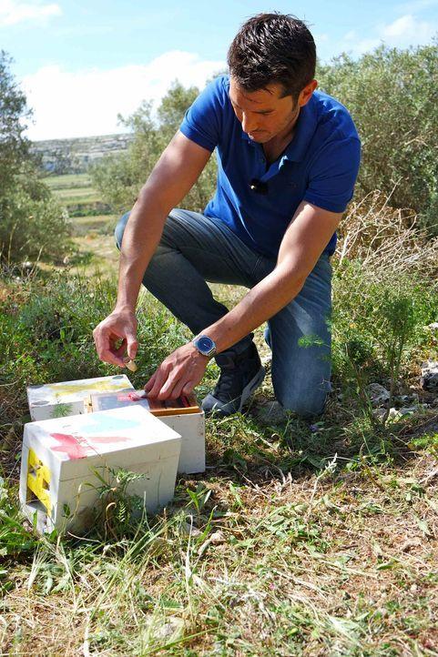 Bienen sind heute unzähligen Bedrohungen ausgesetzt und mancherorts bereits von der Bildfläche verschwunden. Stefan Gödde macht sich auf die Suche n... - Bildquelle: ProSieben