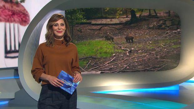 Galileo - Galileo - Samstag: Wildfleisch Auf Deutschen Tischen