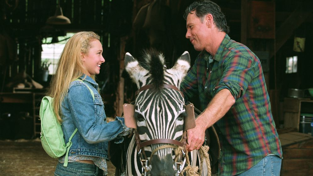Im Rennstall ist das Zebra los - Bildquelle: Constantin Film