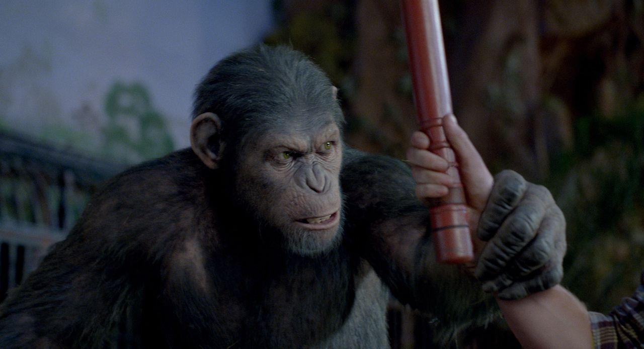 Als Caesar gegen Wills Willen in ein Tierheim abgeschoben wird, wo er der Willkür sadistischer Wärter ausgeliefert ist, sorgt er schon bald dafür... - Bildquelle: 2011 Twentieth Century Fox Film Corporation. All rights reserved.