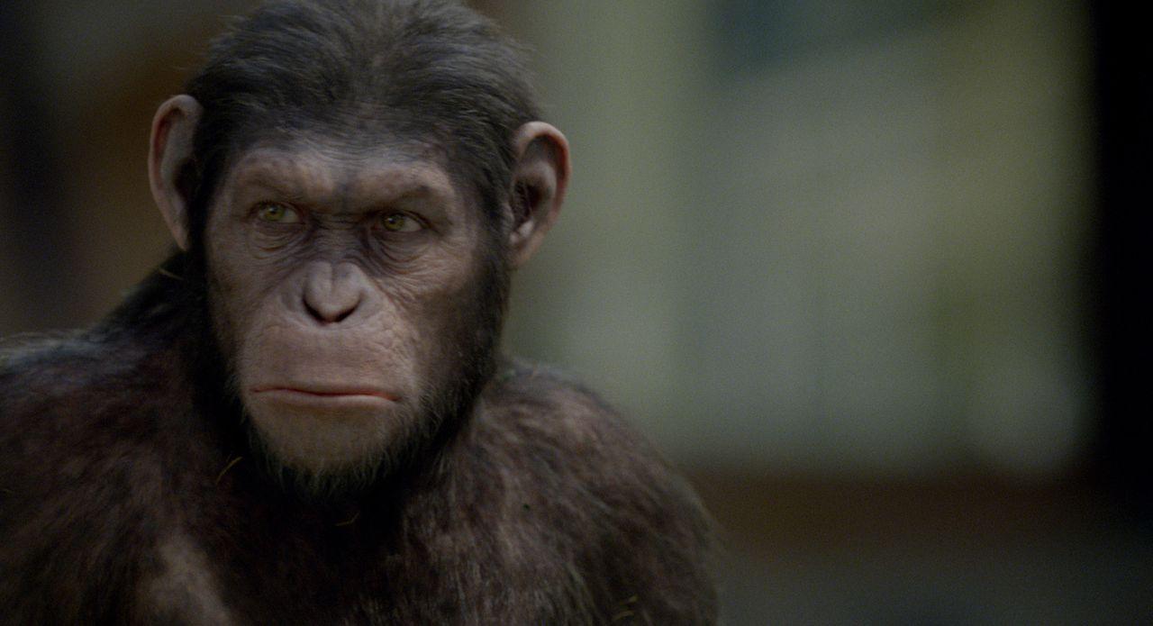 Anführer der Revolution der Affen: der überaus intelligente Caesar ... - Bildquelle: 2011 Twentieth Century Fox Film Corporation. All rights reserved.