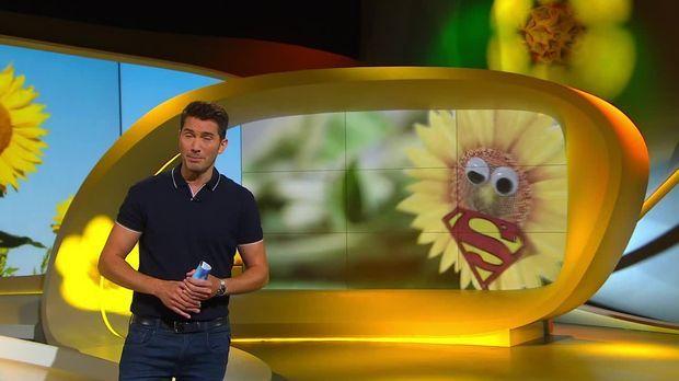 Galileo - Galileo - Mittwoch: Warum Sonnenblumen Superhelden Sind