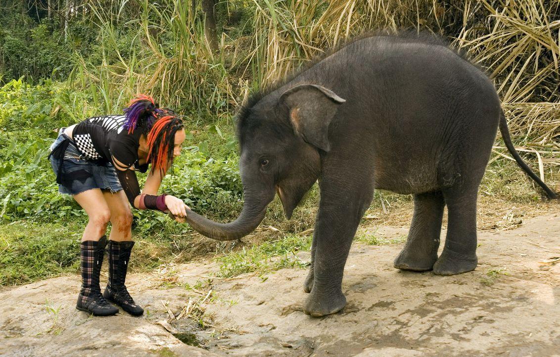 Hat ein Herz für Elefanten: Taffie (Monique van der Werff) ... - Bildquelle: Jan van den Nievwenhuijzen