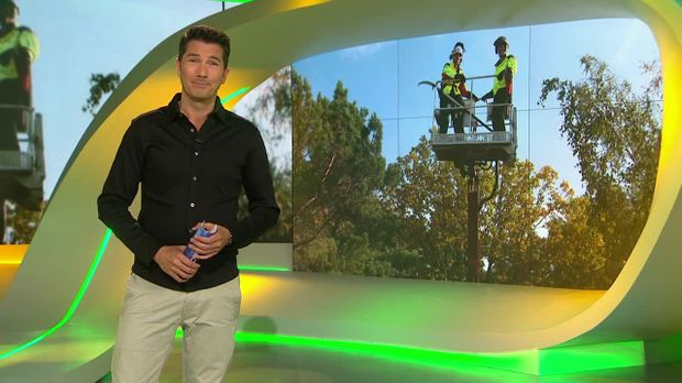 Galileo - Galileo - Montag: Der Job Des Baumbeschneiders
