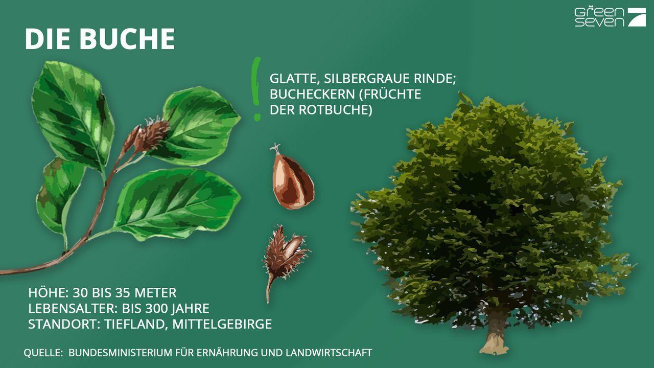 Buche - Bildquelle: ProSieben