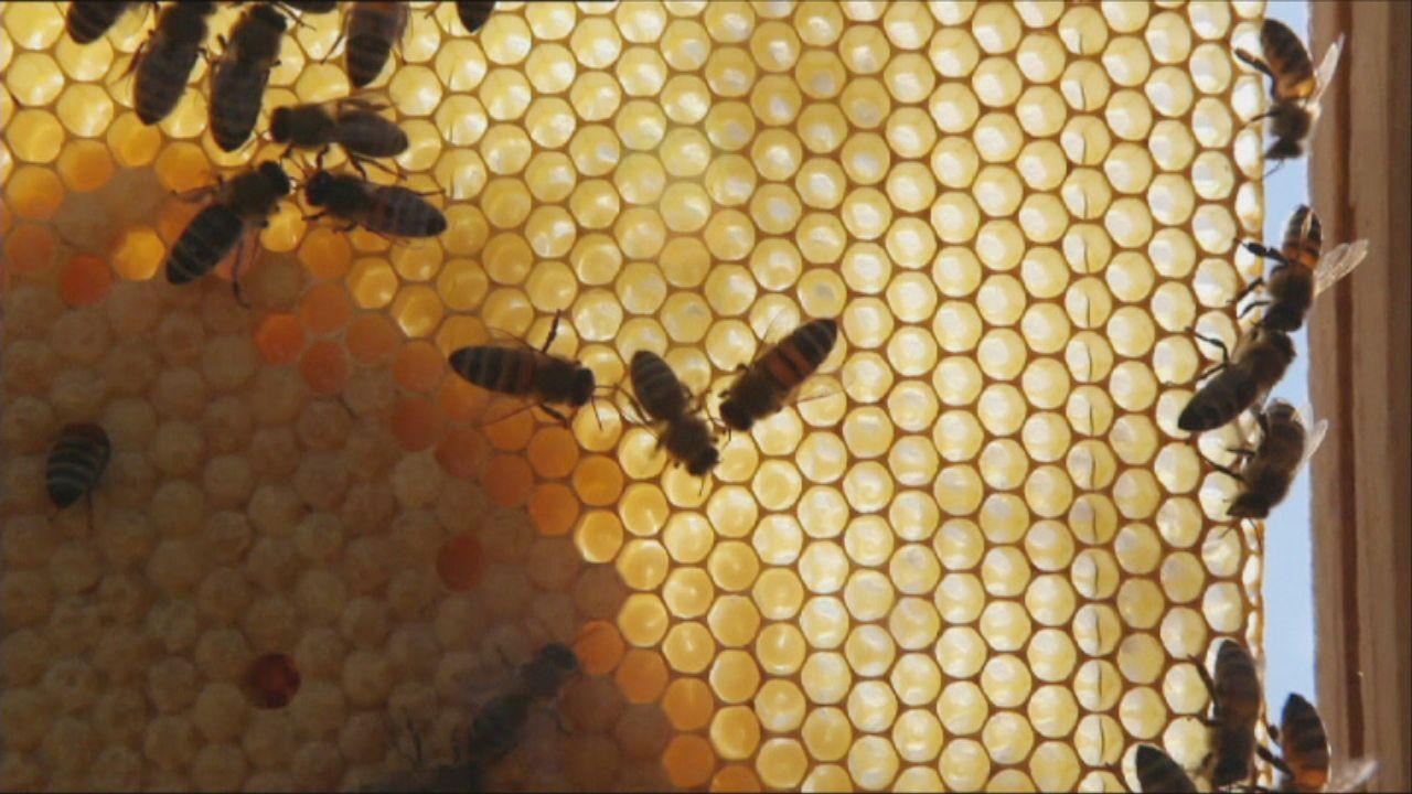Bienen spüren Sprengstoff auf und ihre ganz speziellen Fähigkeiten helfen dabei, eine Ölpest zu bekämpfen oder die Roboterentwicklung zu revolutioni... - Bildquelle: ProSieben