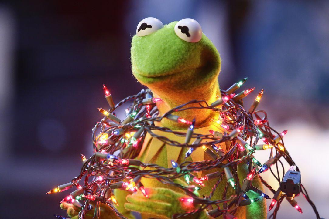 Das Weihnachtsspezial steht an - und die Vorbereitungen dafür laufen auf Hochtouren: Kermit ... - Bildquelle: Nicole Wilder ABC Studios