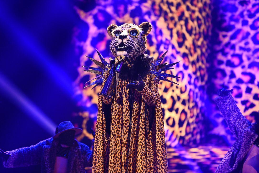 Der Leopard - Bildquelle: Willi Weber ProSieben / Willi Weber