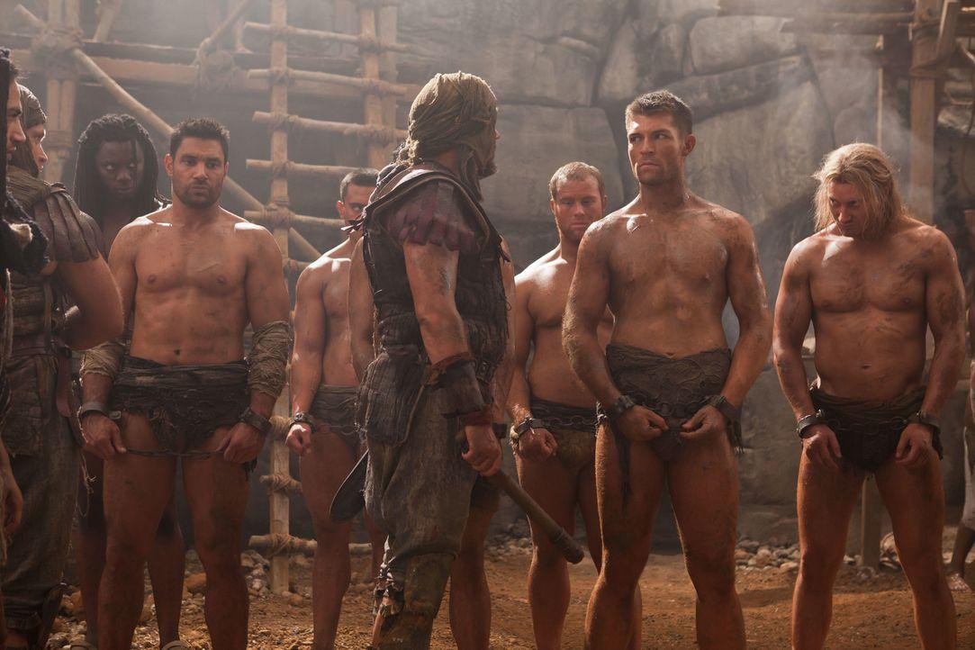 Wagen sich mitten in die Höhle des Löwen, um Naevia zu retten: Spartacus (Liam McIntyre, 2.v.r.) und Crixus ( Manu Bennett, 6.v.r.) ... - Bildquelle: 2011 Starz Entertainment, LLC. All rights reserved.