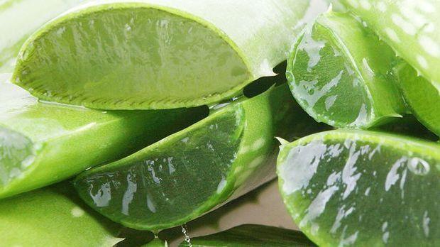 Aloe Vera ist bekanntlich ein Klassiker für feuchtigkeitsspendende Hautpflege...