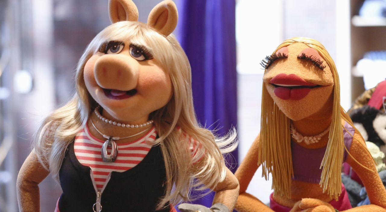 Da sie durch neue Showelemente weniger Präsenz in der Sendung hat, versucht sich Miss Piggy (l.) abzulenken. Doch ist ein Kurs in Luftakrobatik mit... - Bildquelle: Nicole Wilder ABC Studios