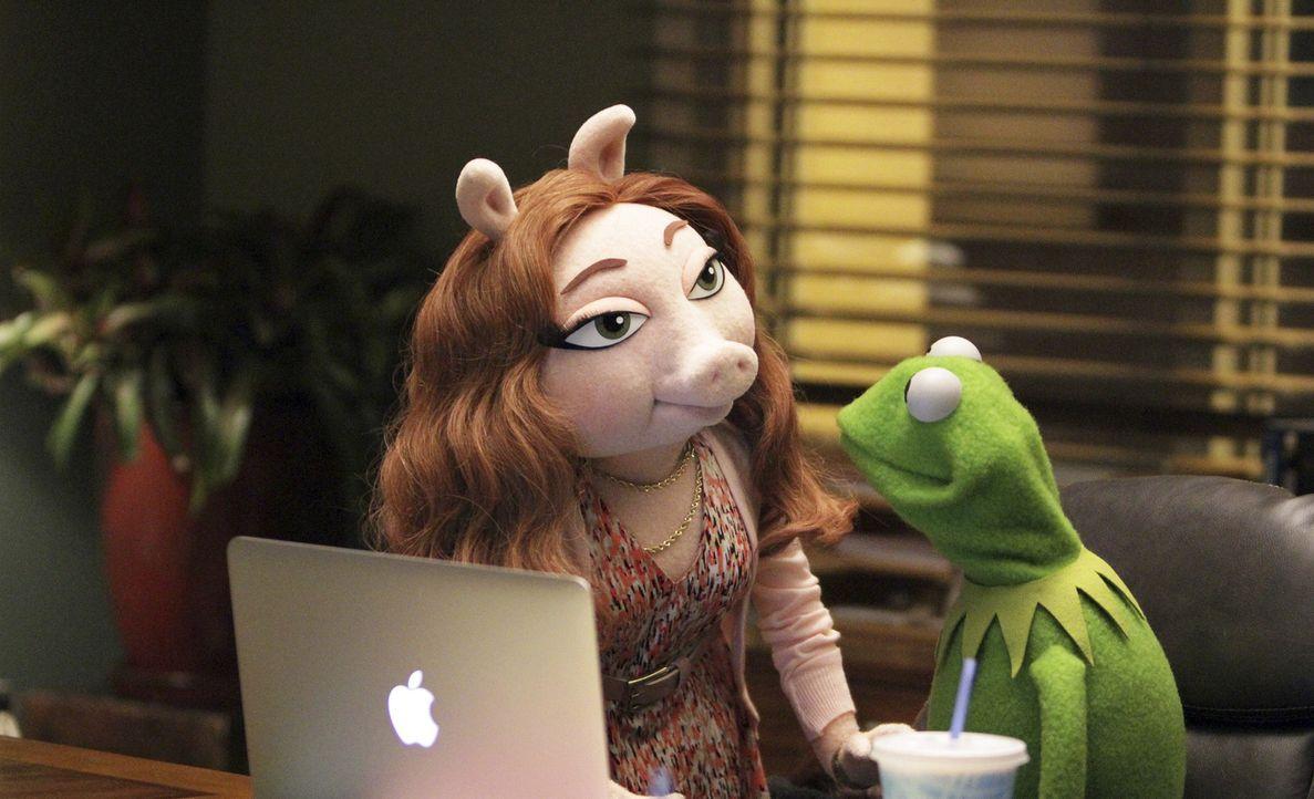 Während Miss Piggy sauer auf Kermit (r.) ist, da dieser Schauspielerin und Regisseurin Elizabeth Banks als Gast für ihre Sendung eingeladen hat, gen... - Bildquelle: Andrea McCallin ABC Studios