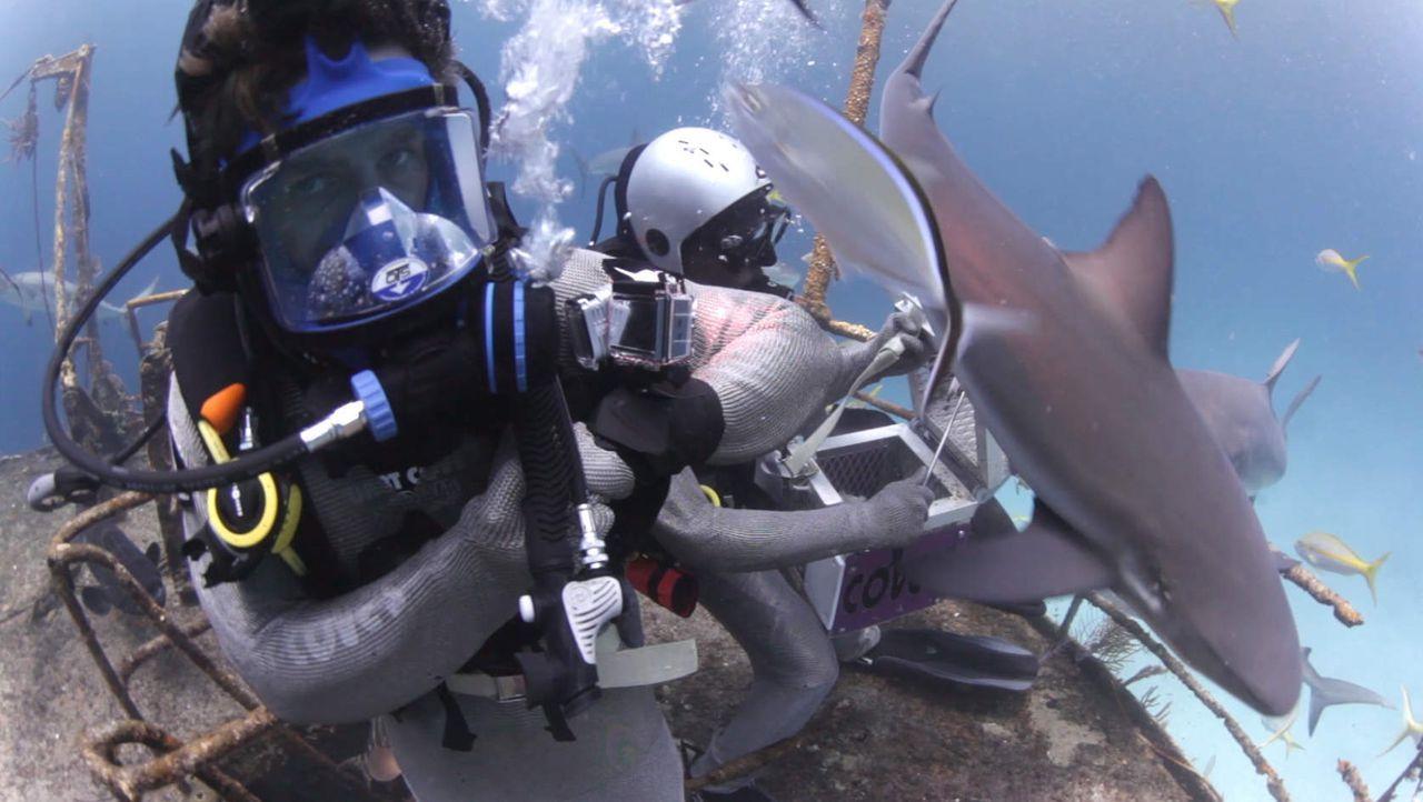 Klaas beim Haitauchen
