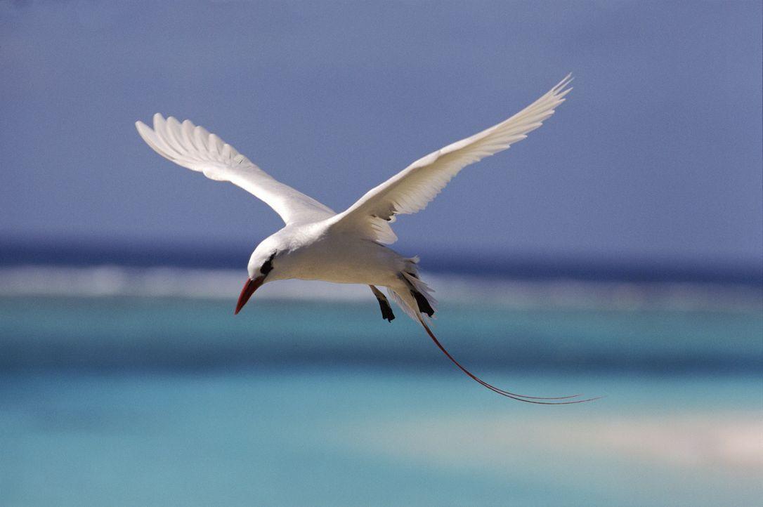 """Egal, ob Flügel oder Flossen, acht oder zwei Beine - """"Unser Leben"""" nimmt den Zuschauer auf eine einzigartige Reise an die schönsten Orte der Welt mi... - Bildquelle: Michael Pitts / naturepl.com"""