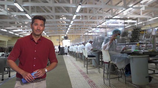 Galileo - Galileo - Mittwoch: Zwei Tage In Der Fischdosenfabrik
