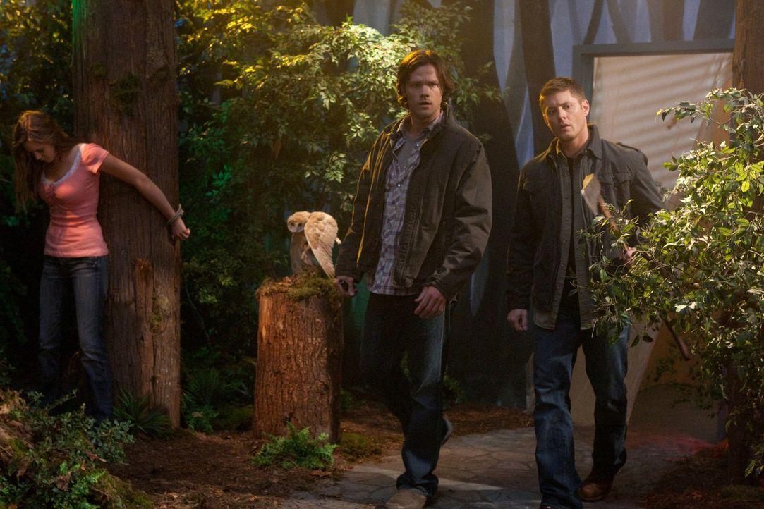 Kämpfen wieder gemeinsam gegen das Böse: Sam (Jared Padalecki, r.) und Dean Winchester (Jensen Ackles, M.) ... - Bildquelle: Warner Bros. Television