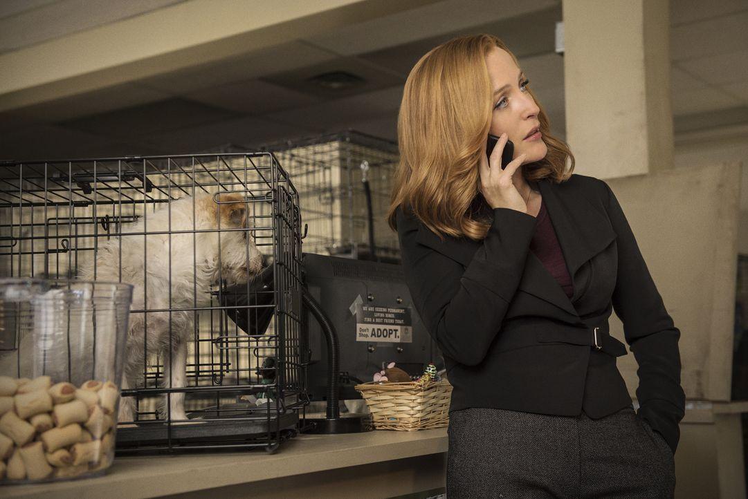 Begibt sich auch beim Tierfänger auf Spurensuche: Scully (Gillian Anderson) ... - Bildquelle: 2016 Fox and its related entities.  All rights reserved.