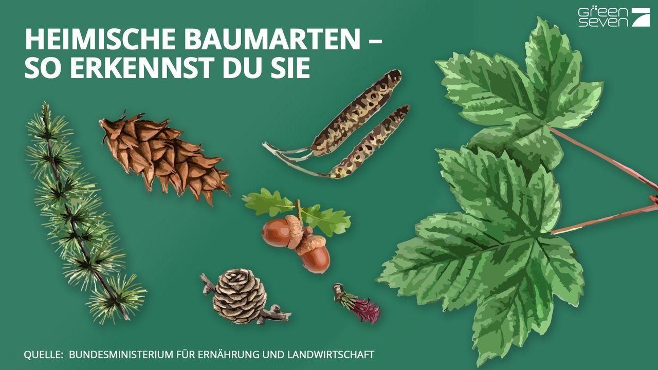 Teaserbild - Bildquelle: ProSieben