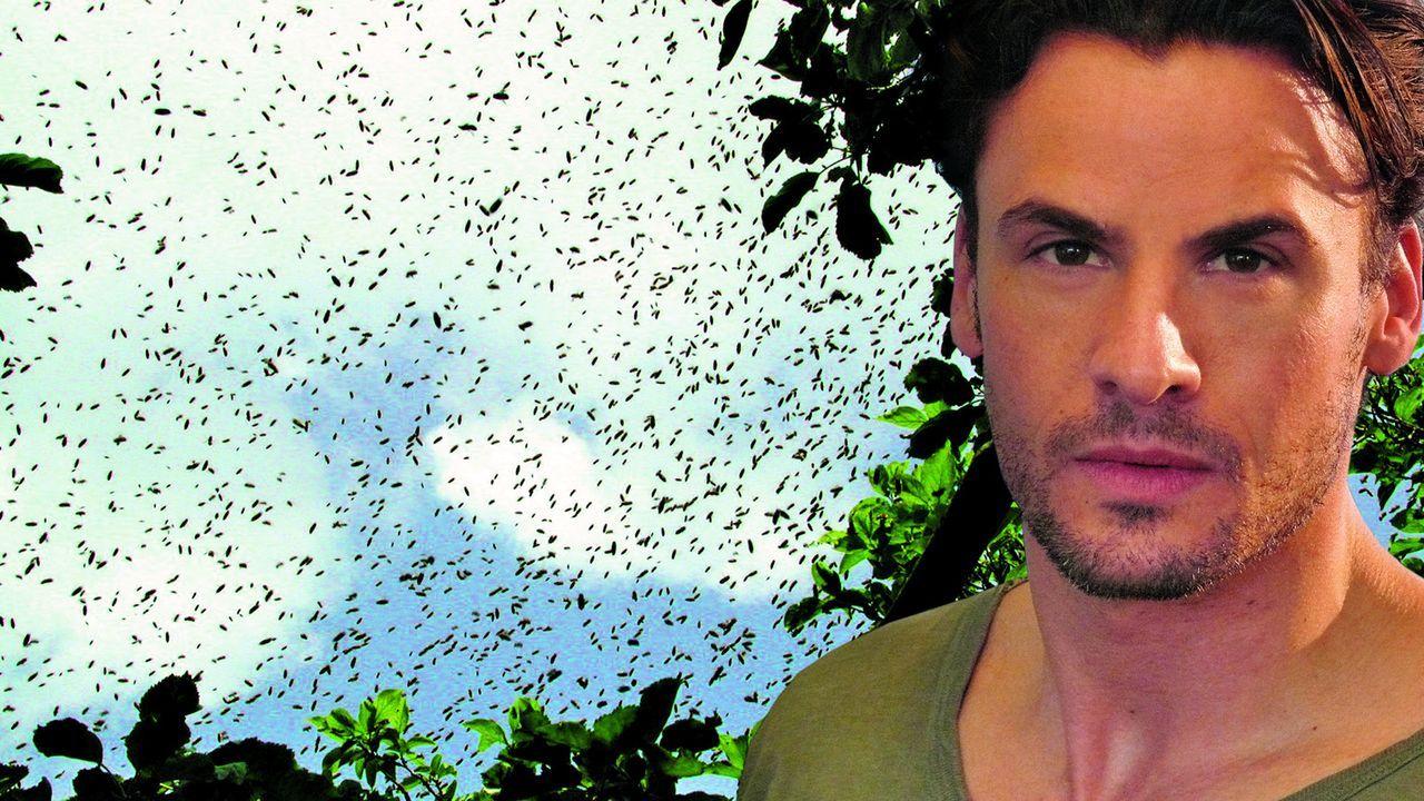 Sheriff Lydon Harris (C. Thomas Howell) muss sich mit unzähligen Killerbienen herumplagen ... - Bildquelle: Regent Entertainment