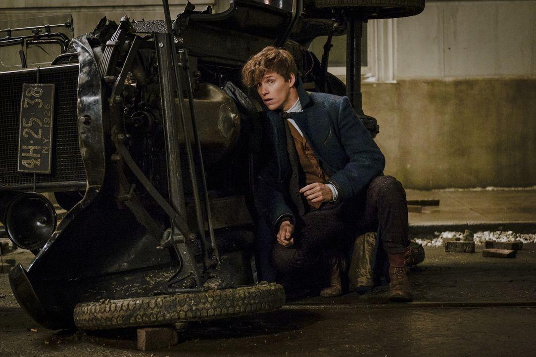 Newt Scamander (Eddie Redmayne) - Bildquelle: Warner Bros.