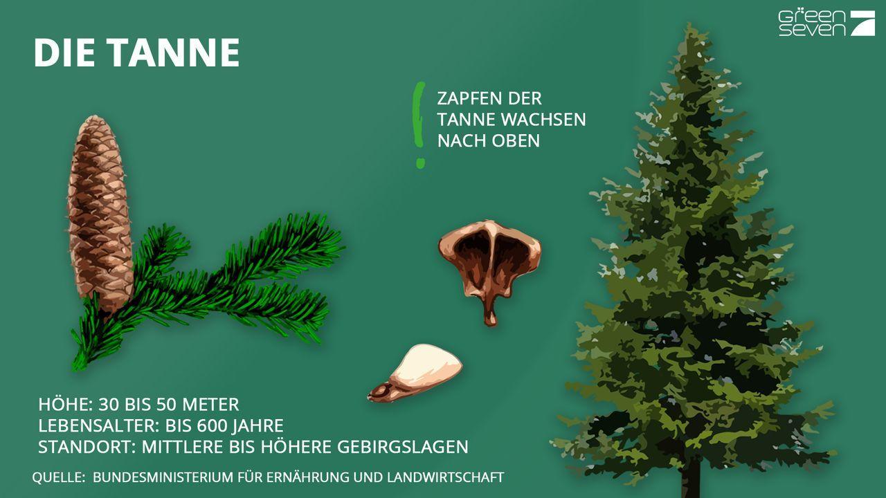 Tanne - Bildquelle: ProSieben