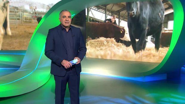 Galileo - Galileo - Donnerstag: Zehn Fragen An Eine Vegane Rinderzüchterin