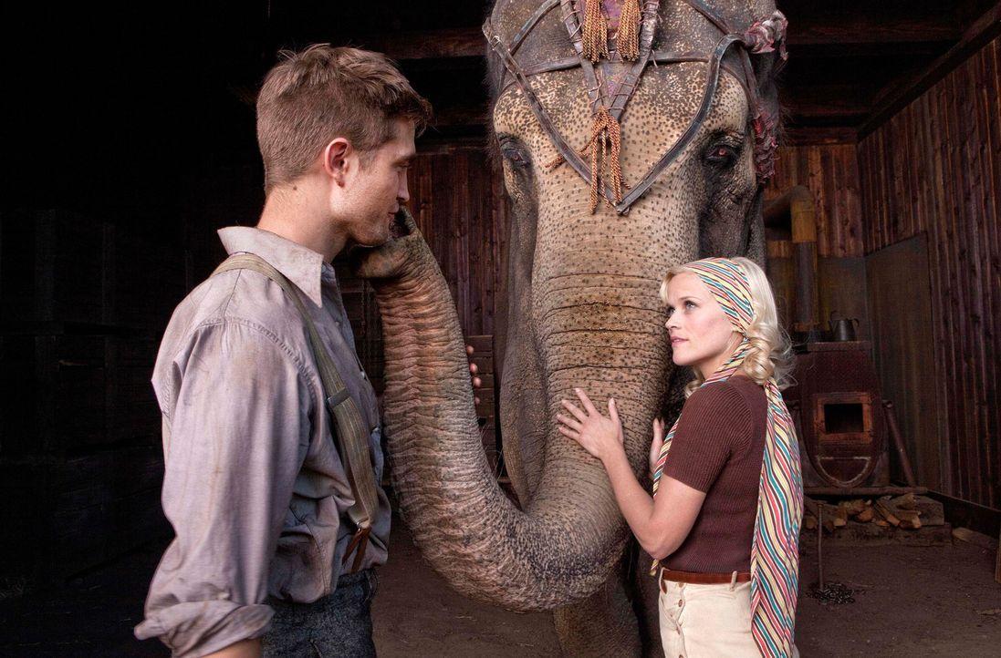 Marlena (Reese Witherspoon, r.) und Jacob (Robert Pattinson, l.) verlieben sich ineinander, doch ihre Romanze ist ein riskanter Drahtseilakt. Denn M... - Bildquelle: David James 2011 Twentieth Century Fox Film Corporation. All rights reserved.